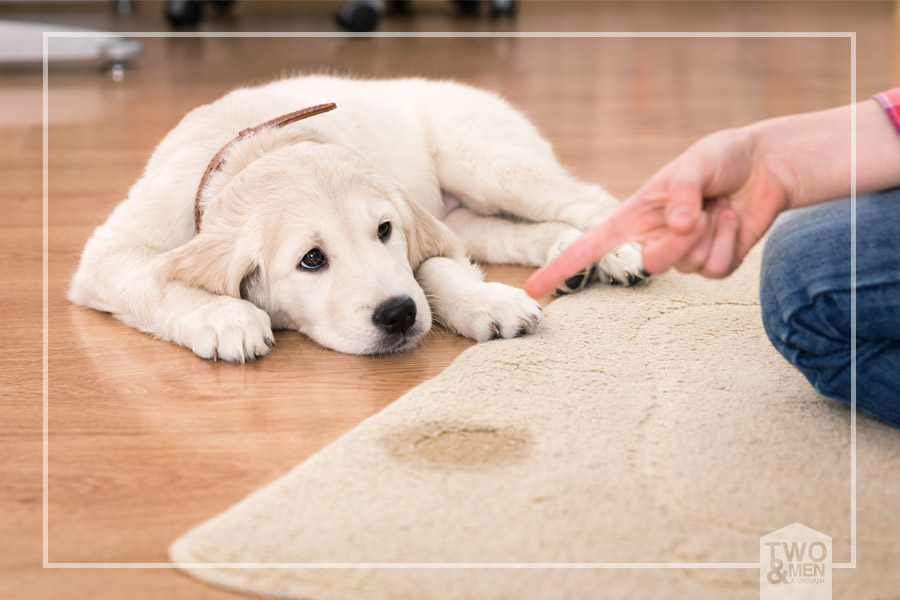 Pet Problems: How to Rid Your Home of Pet Smells